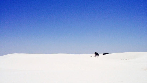 Bush with hardened base in White Sands National Park