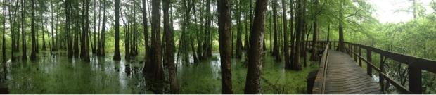 Lake Martin Swamp Boardwalk in Louisiana
