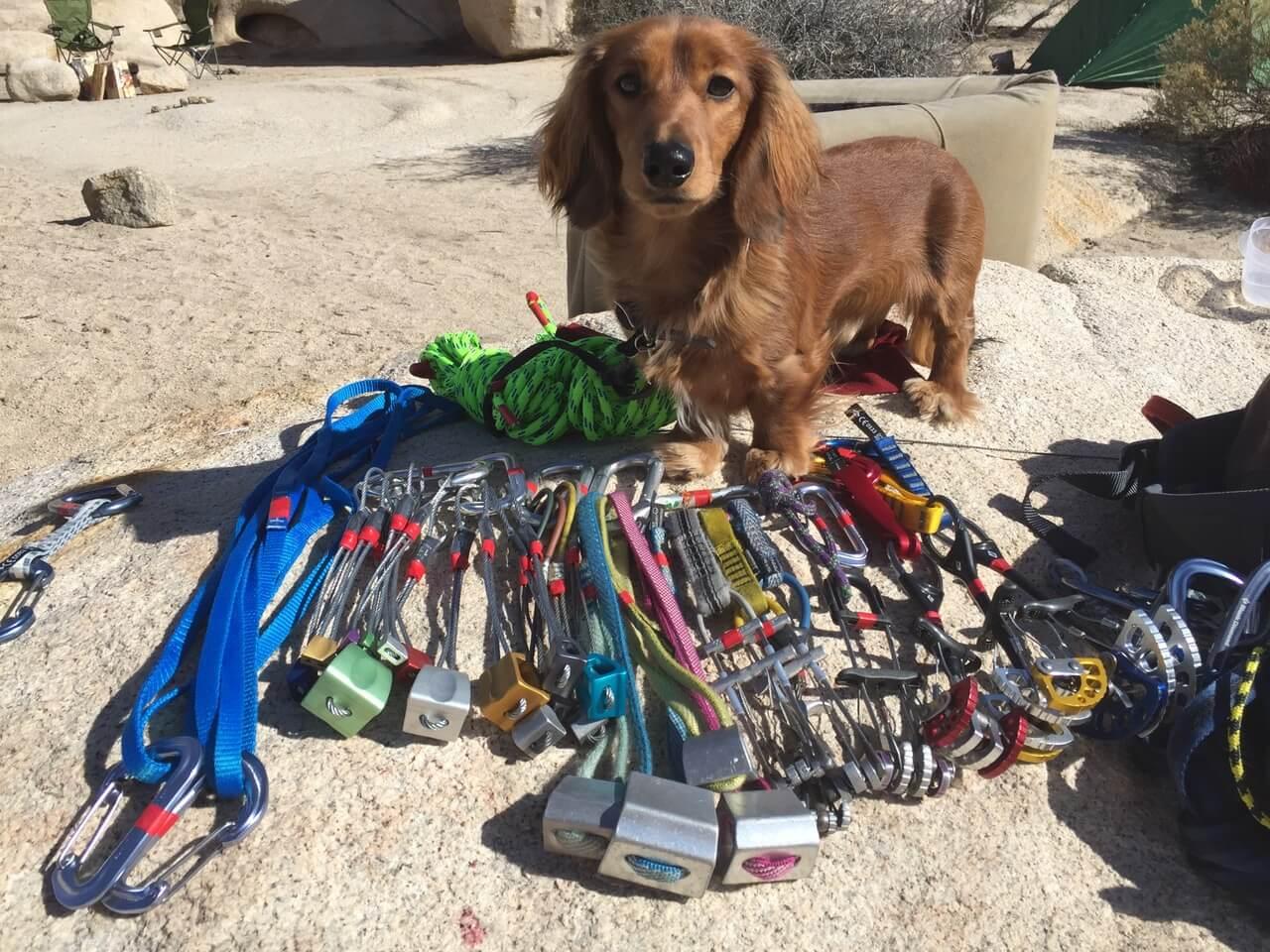 cute-dog-trad-rack